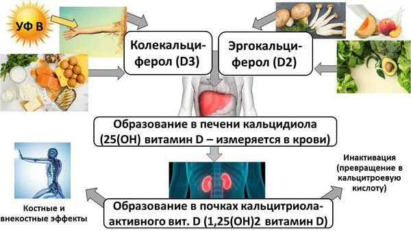 Различные формы витамина D и его источники