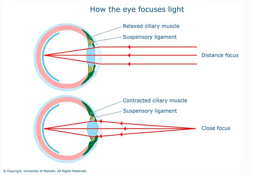 Как глаз фокусирует свет