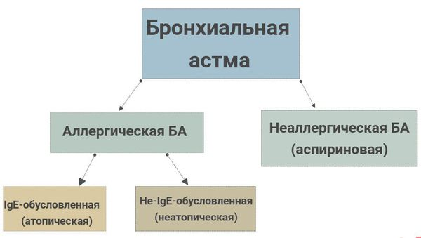Классификация астмы по причинам развития