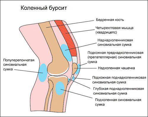 Бурсы колена