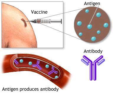 Вакцинация против гепатита А