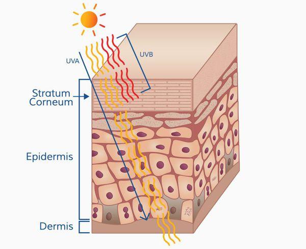 Проникновение ультрафиолетовых лучей в кожу