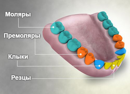 Четыре типа зубов