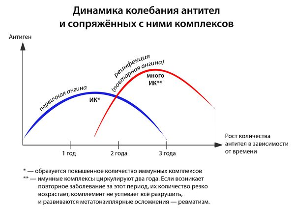 Динамика колебания антител и сопряжённых с ними комплексов