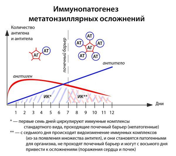 Механизм метатонзиллярных осложнений