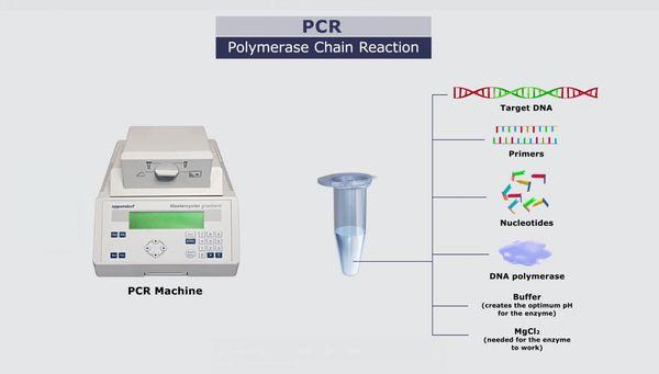 Полимеразная цепная реакция (ПЦР)