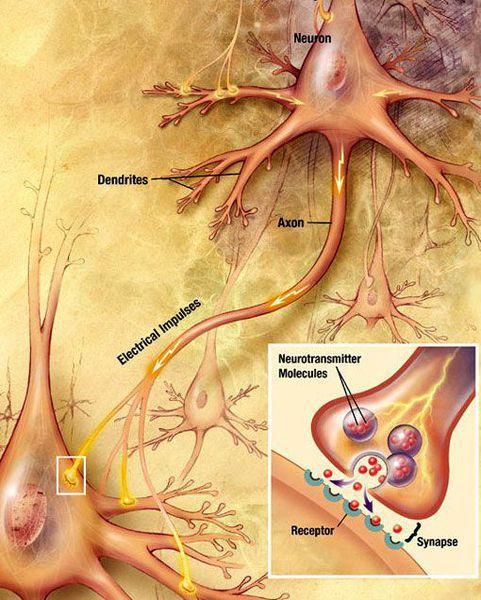 Работа нейрона