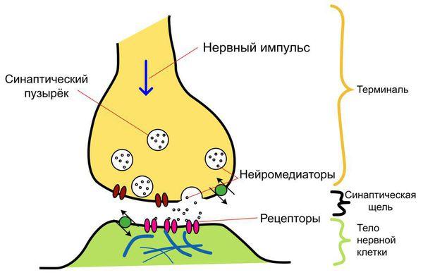 The pathogenesis of depression