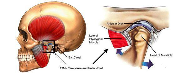 Височно-нижнечелюстной сустав и жевательные мышцы