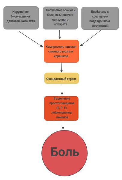 Механизм развития боли при дорсопатии