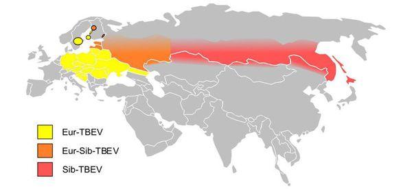Эпидемиология клещевого энцефалита