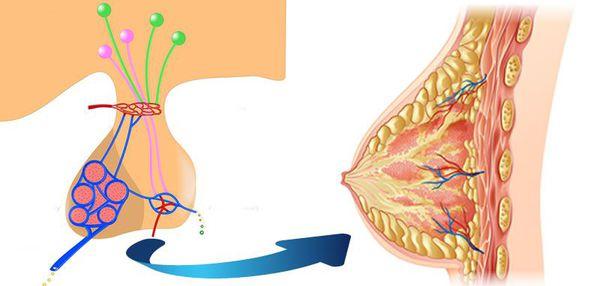 Увеличение уровня пролактина в крови