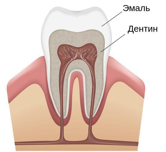 Твёрдые ткани зуба: эмаль и дентин