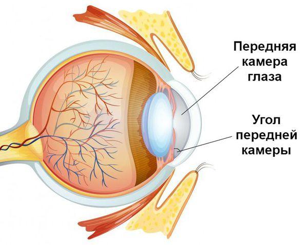 Угол передней камеры глаза