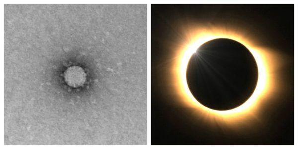 """""""Корона"""" вируса (слева) и корона солнца (справа)"""