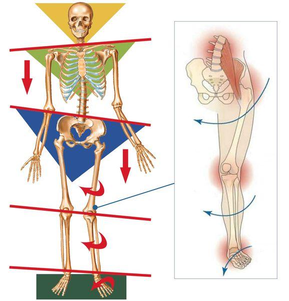 Причина развития боли в спине
