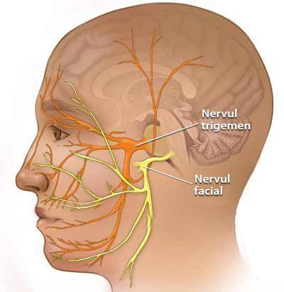 Лицевой и тройничный нерв