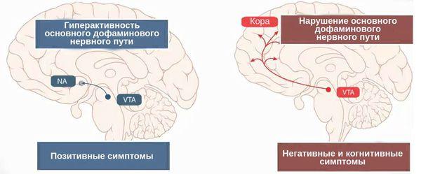 Дисфункция рецепторов NMDA