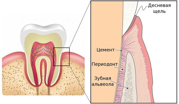 Воспаление комплекса соединительной ткани (периодонта)