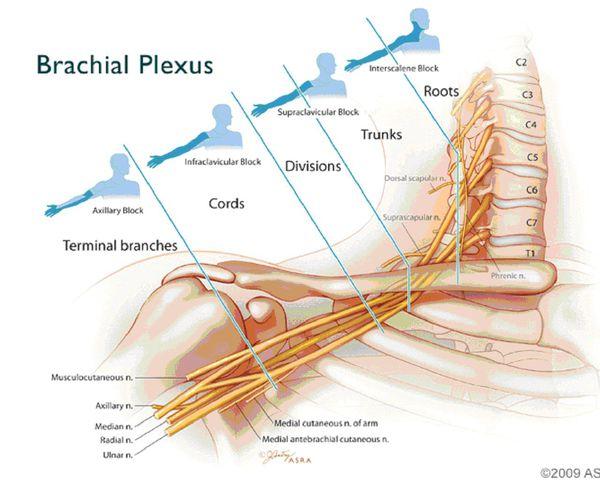 Локализация боли при поражении шейных корешков