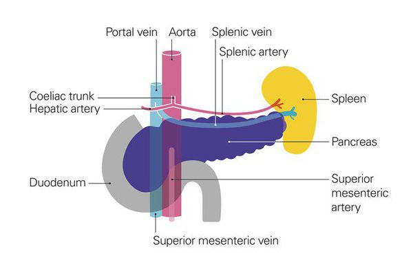 Расположение поджелудочной железы