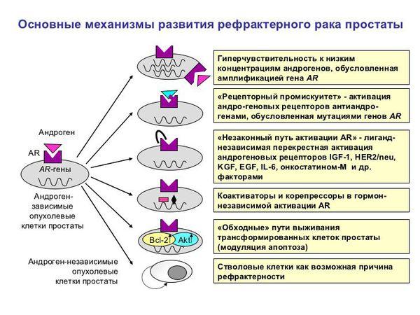 Механизмы развития рака простаты