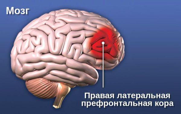 Правая латеральная префронтальная кора головного мозга