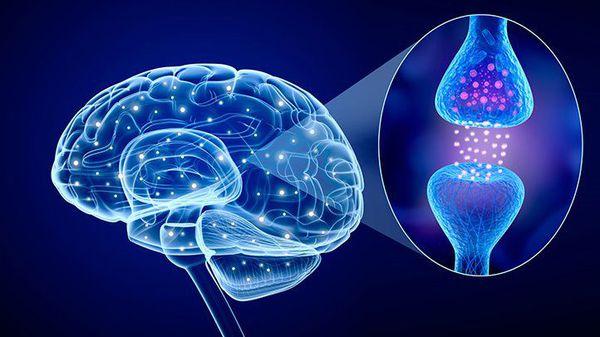 Нейромедиаторы головного мозга, вырабатывающие серотонин