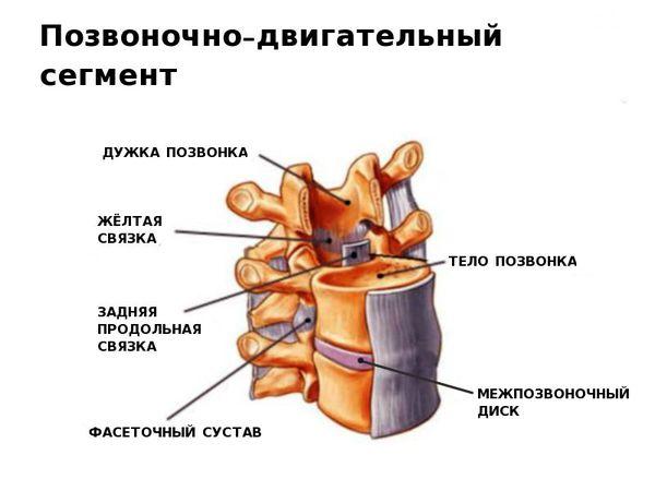 Позвоночно-двигательный сегмент