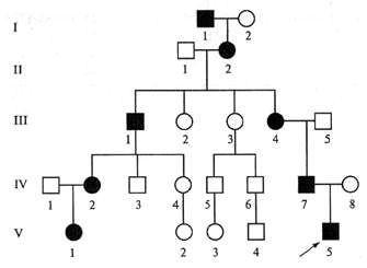 Пример родословной с аутосомно-доминантным заболеванием