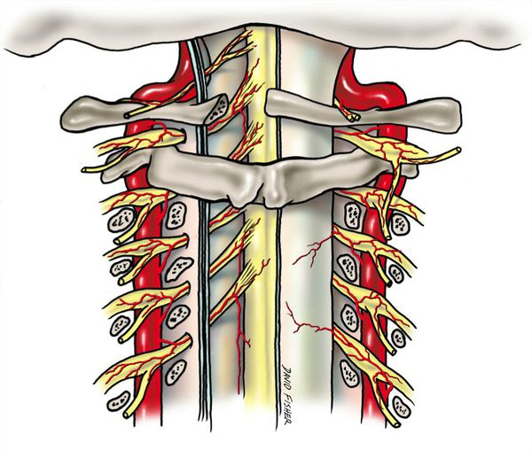 Позвоночные артерии и нервные сплетения
