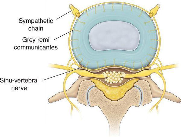 Синувертебральный нерв
