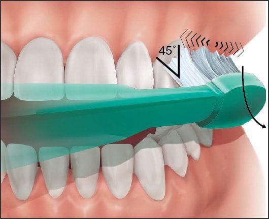 Чистка зубов в технике Bass